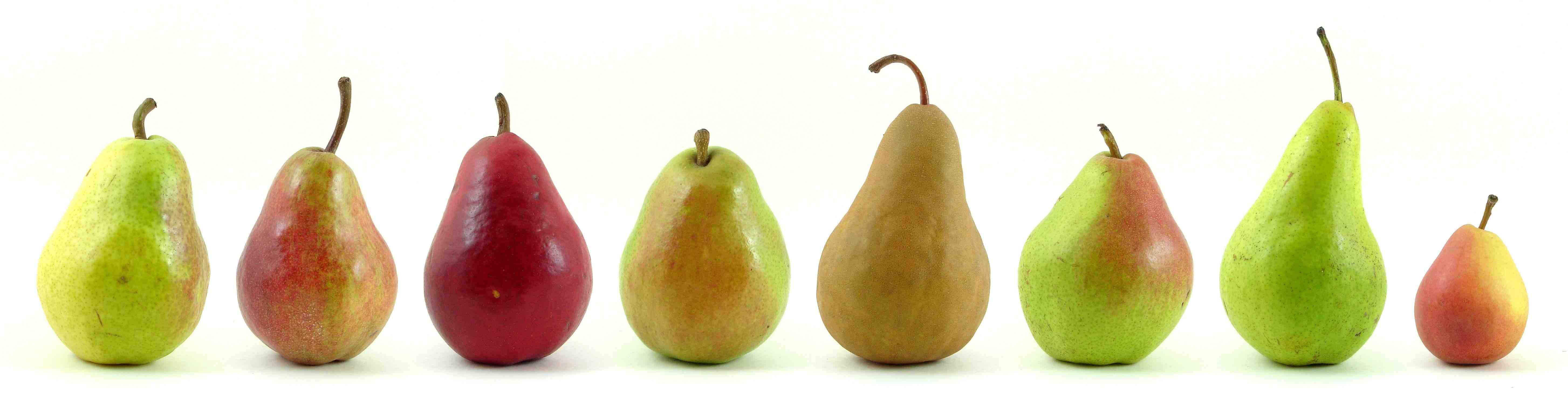 Eight varieties of pears